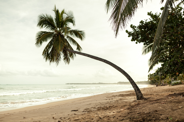 Single palm tree leaning over a caribbean beach