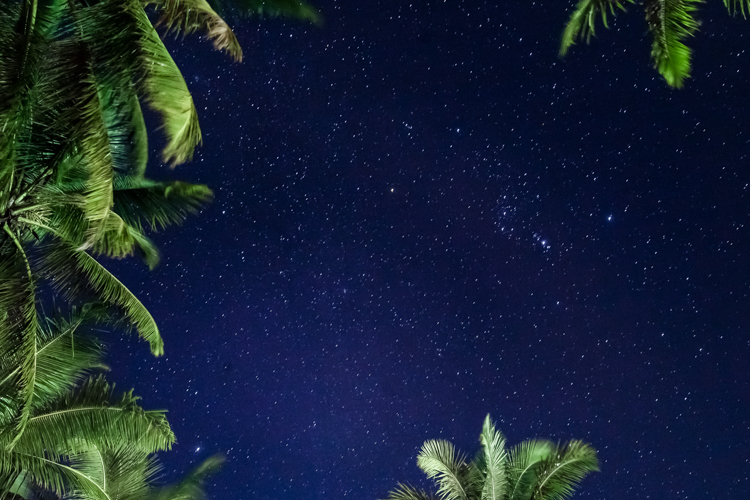 Orion on the blue night sky framed by palm trees